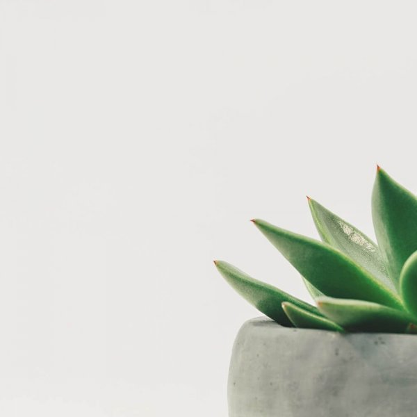 image of a succulent to represent Total Body Wellness, Brownsburg's sexual wellness services