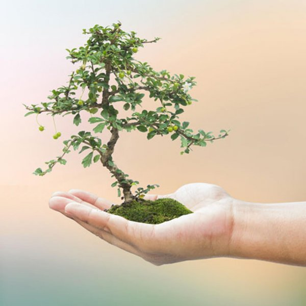image of a bonsai tree to represent Total Body Wellness, Brownsburg's thyroid optimization therapy